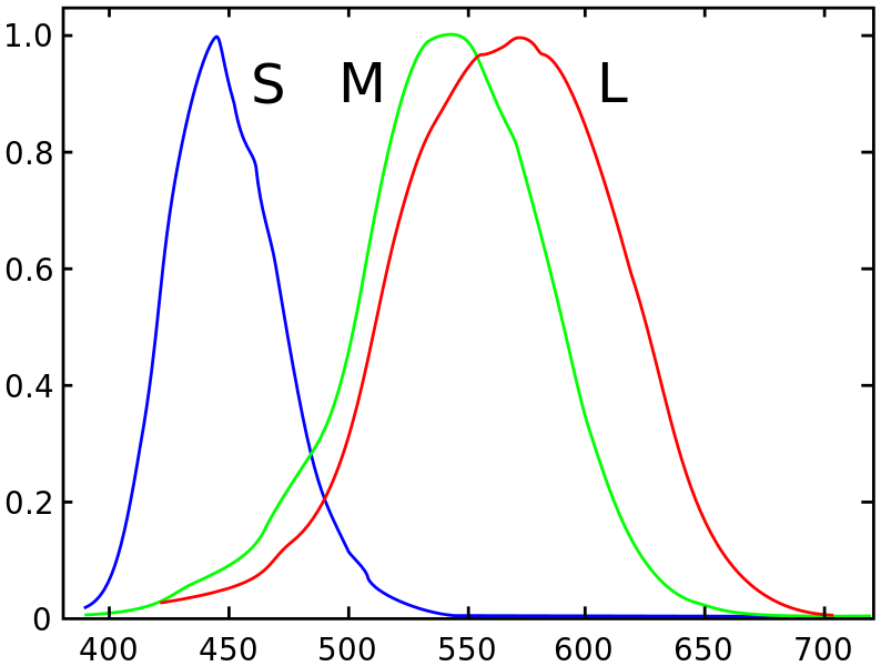 Normalized responsivity spectra for the three types of cone cells. Source: Spectral sensitivity, Wikipedia.